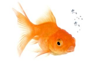 Uutiskirjeviestinnän ToDo-lista, jonka kultakalakin jaksaa lukea